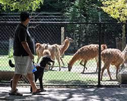 bloorcondo_zoo-min
