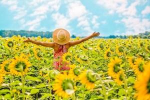 Sunflower Fields of Markham