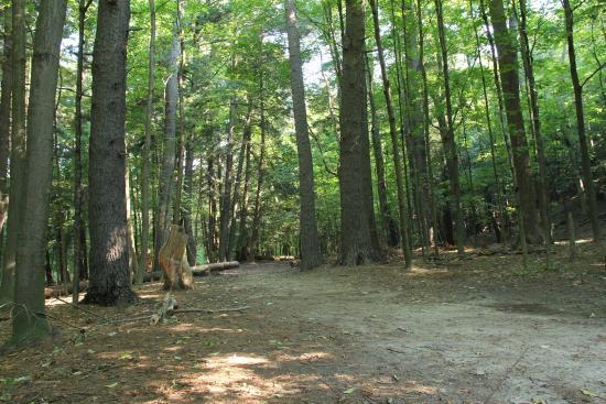 Boyd Conservation Park-min