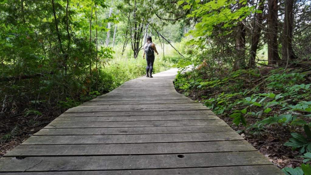 Bruce's Mill Conservation Park-min