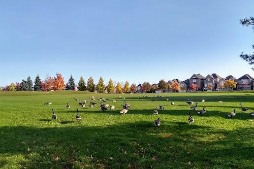 Redstone Park-min